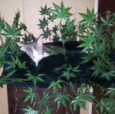 Marijuana Themed Cat Condo