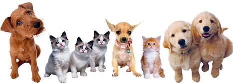Stock photo of multiple kittens and puppies