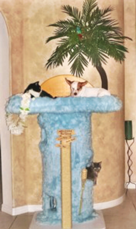 Tropical Themed Cat Furniture