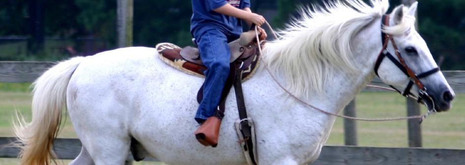 Horse Assisted Therapy Services of North Louisiana, Inc. - Home