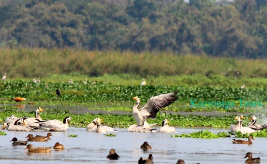 Birding Tour in Assam
