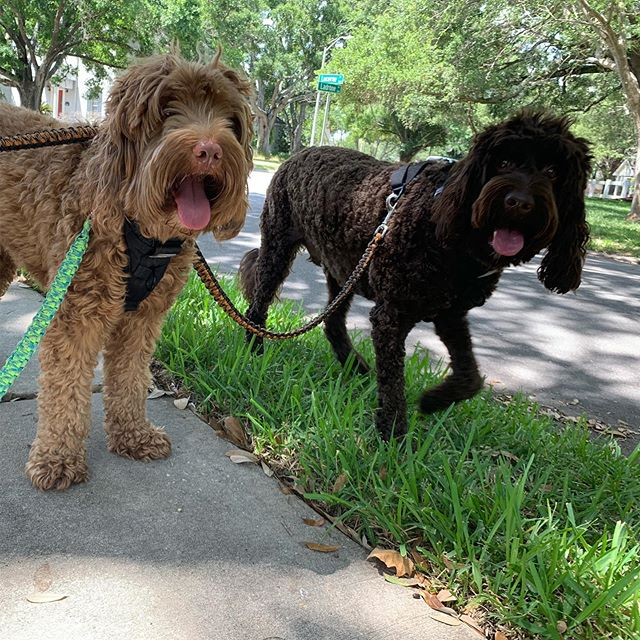 Rover Heights Pet Care Services in Tampa FL - Pet Sitting