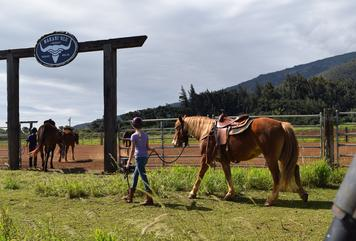 horsemanship lessons, horseback riding, trail rides, maui horse activity