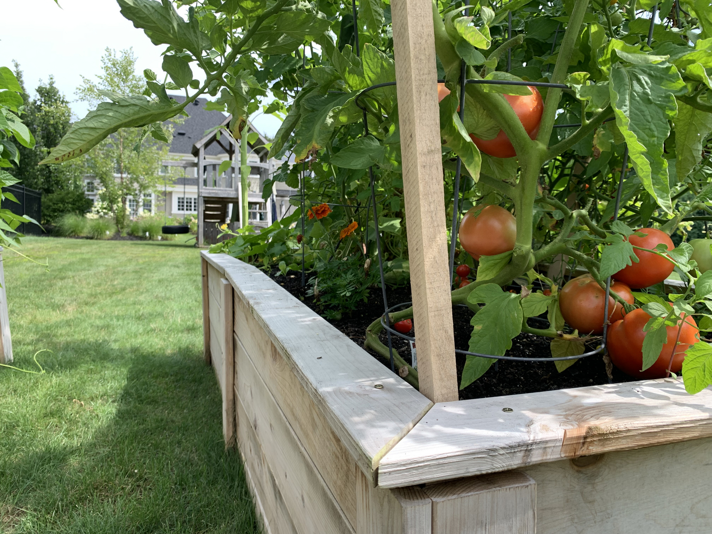 Fresh Start Food Gardens Home