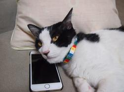 Cat with a phone