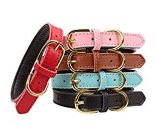 Bernedoodle Leather Collar