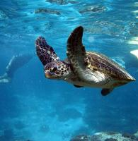 Boat Hire Exmouth Coral Bay - Turtle - Marine Wildlife