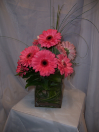 "5"" glass cube vase arrangement with gerbera daisies and a variety of foliage."