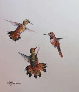 Flight, colored pencil and ink drawing of hummingbirds by Lindy Severns