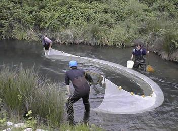 men using seine net in a river