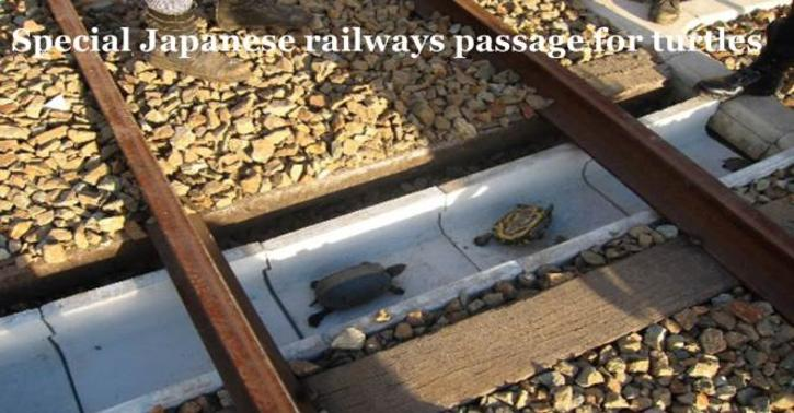 Special Japanese railways passage for turtles