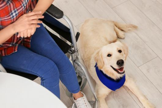 diabetic service dogs Chattanooga