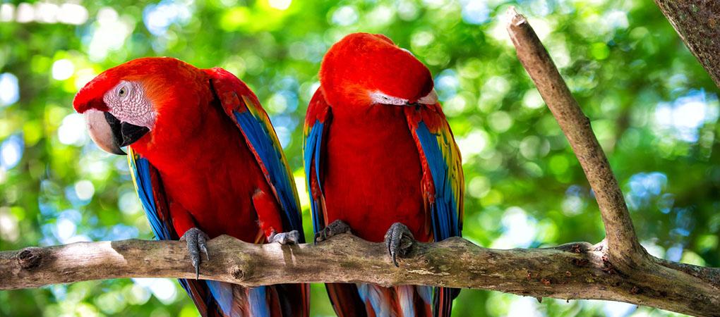 parrot breeder omar s exotic birds