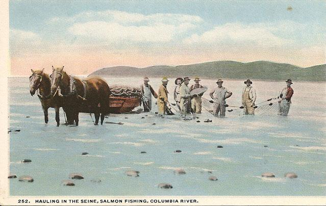 Old picture of men using a horse to haul in a seine net on the beach