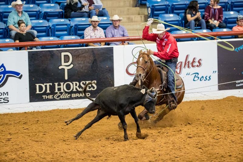 Bobby Lewis Quarter Horses - Horse Trainer, Roping Training Breeding