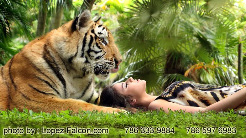 Tiger for Arabian Nights Quinceanera with Tigers Moroccan Theme Quinces miami Photography Quinces Video Arabian Quinceanera Dresses Miami