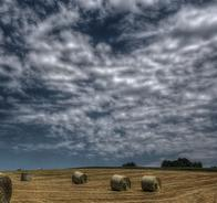 Landscape of a field of hay with haybales