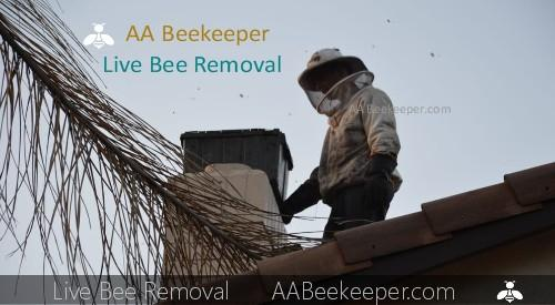 Yucca Valley bee removal services