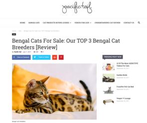 Bengal Cat Breeders | Bishop's Bengals