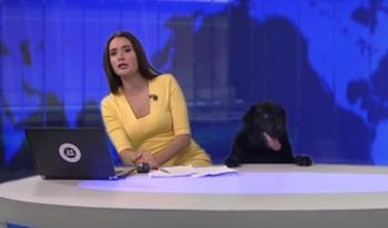 Dog's Surprise Appearance During Live News Broadcast