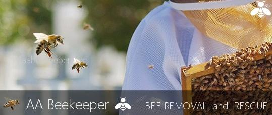 Fallbrook Bee Removal and Rescue