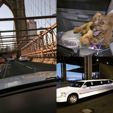 NY Limo driver saves dog on the Brooklyn Bridge