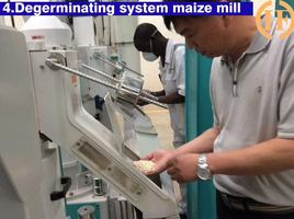 degerminating,dehulling maize for degermed maize