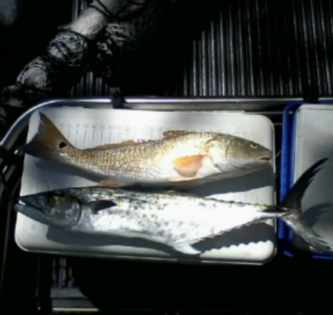 redfish and mackerel on top of cooler