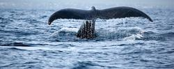 Whale Watching, Nature Trips