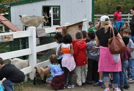 kids petting farm animals