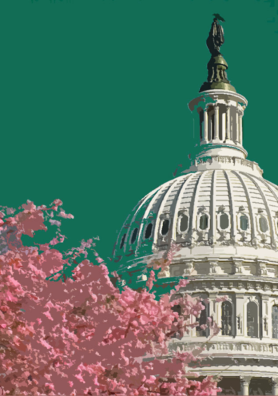 dome of Congress on right with pink-blossoming cherry tree in front on left, photoshopped to look like cutouts, green/aqua sky
