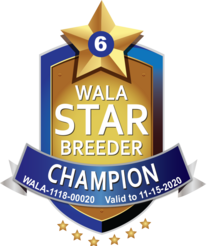 WALA Star Reward Program