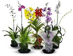Chula Orchids Clear Plastic Orchid Pots Decorative