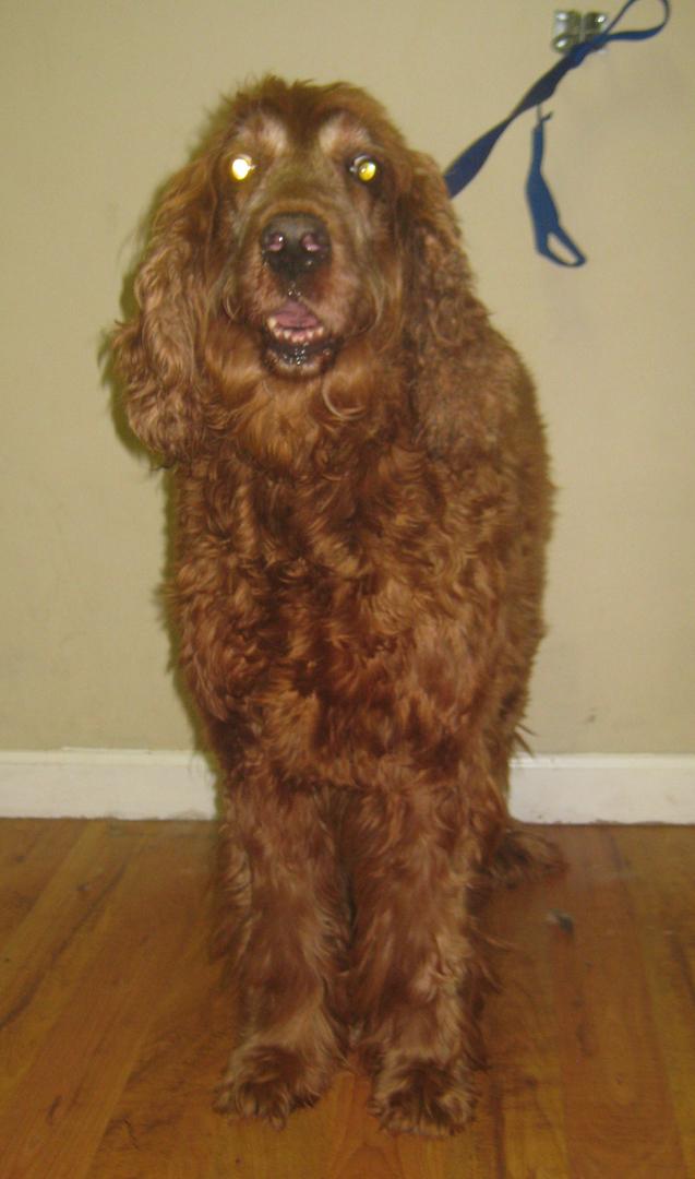 All Paws Pet Salon Home Page Auburn Ma