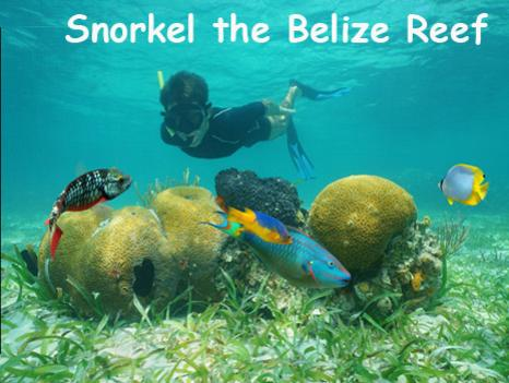 A boy snorkels over colorful corals and tropical fish at the Belize barrier reef. Belize Adventure Tours