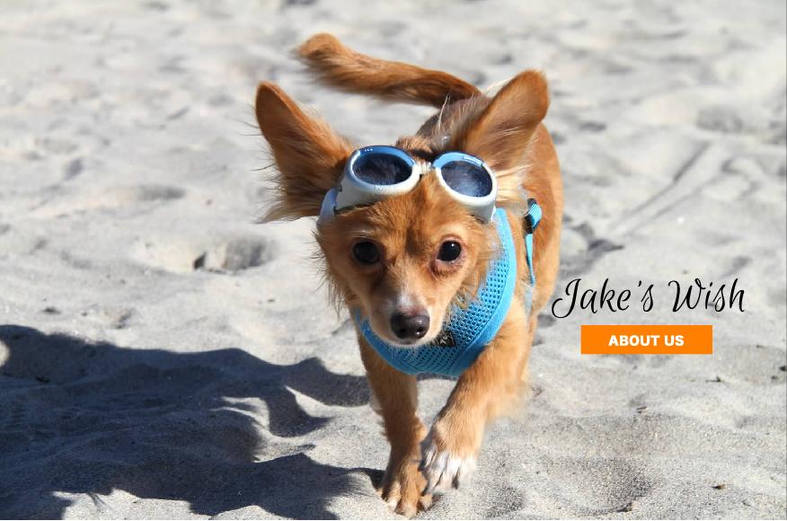 Jakes Wish Dog Rescue San Jose Ca