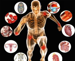 VTCT Level 3 Anatomy & Physiology