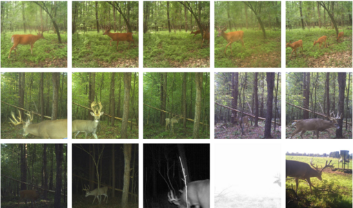 Trail Camera Gallery