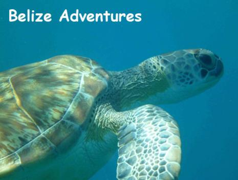 An adult sea turtle swims by in the deep blue. Belize Adventure Tours