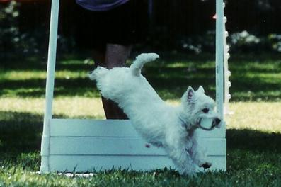Events San Francisco West Highland White Terrier Club Valley Springs Ca