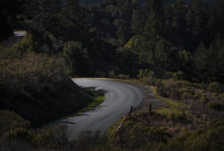 twisty forest road through california