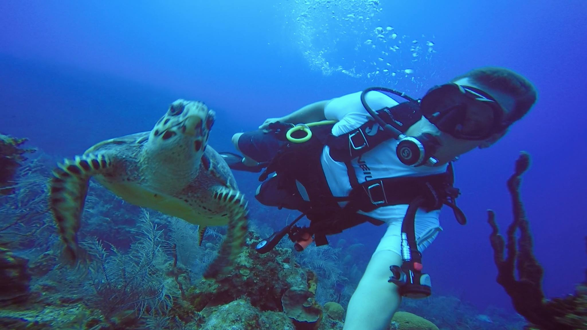 Fort lauderdale scuba diving classes certifications instructor scuba diving certifications classes lessons 1betcityfo Gallery