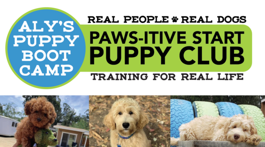 Link to Puppy Club