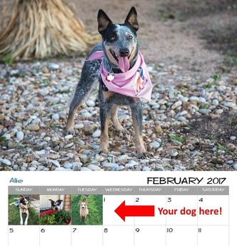 Texas Cattle Dog Rescue calendar