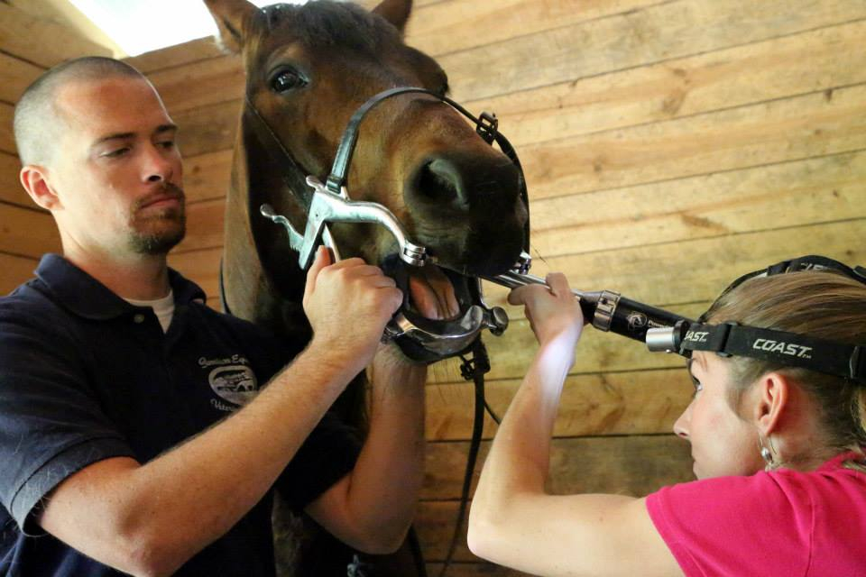Garrison Equine Veterinary Care in Anderson, South Carolina