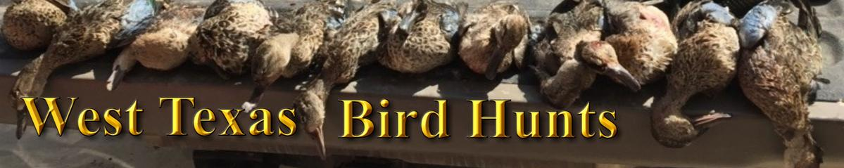Bird Hunts