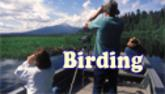 birding at Harriman Springs Resort & Marina. Photos by Anders Tomlinson