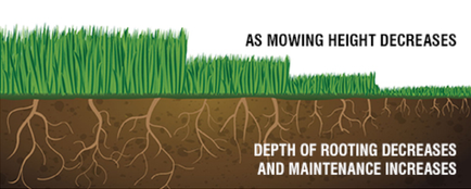 grass blades mowing height root depth