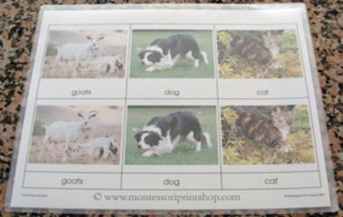 how to laminate montessori 3-part cassified cards - Montessori print shop
