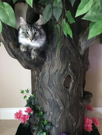 Incredible Cat Trees